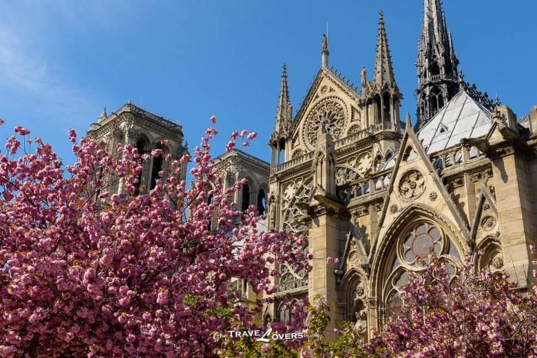Paris Notre Dame de Paris Sakura